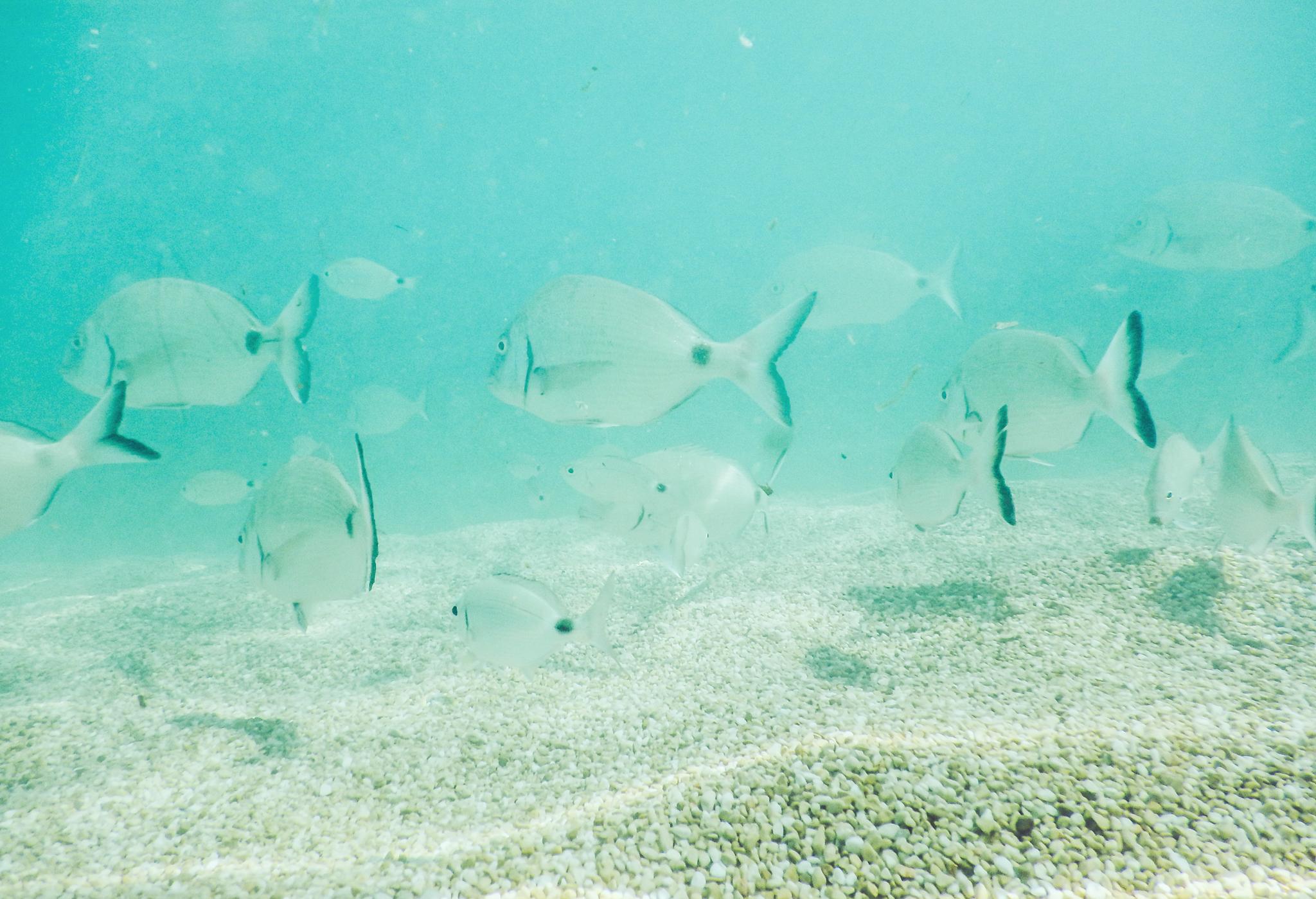 jannideler-underwater3