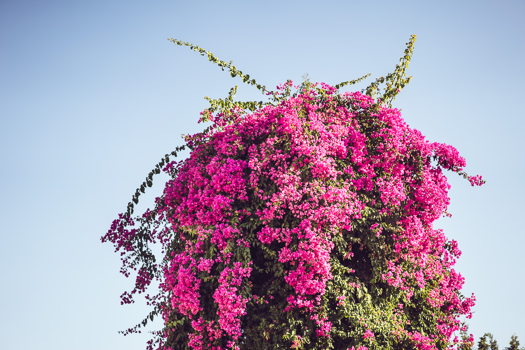 janni-deler-marbella-casamono-sunsetDSC01491