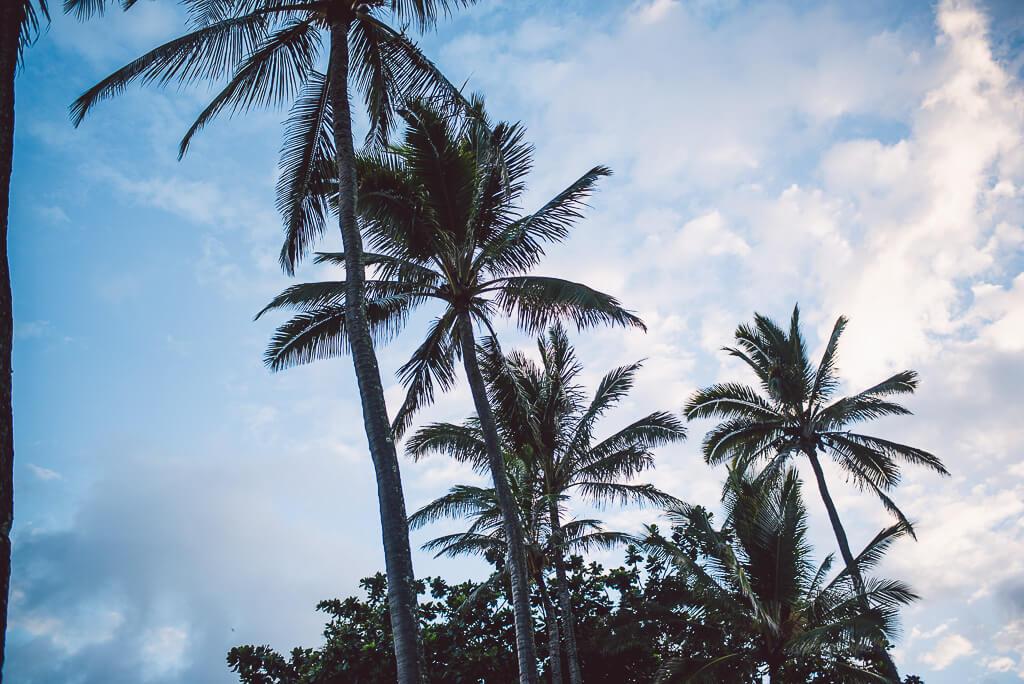 janni-deler-hawaiiDSC_6268