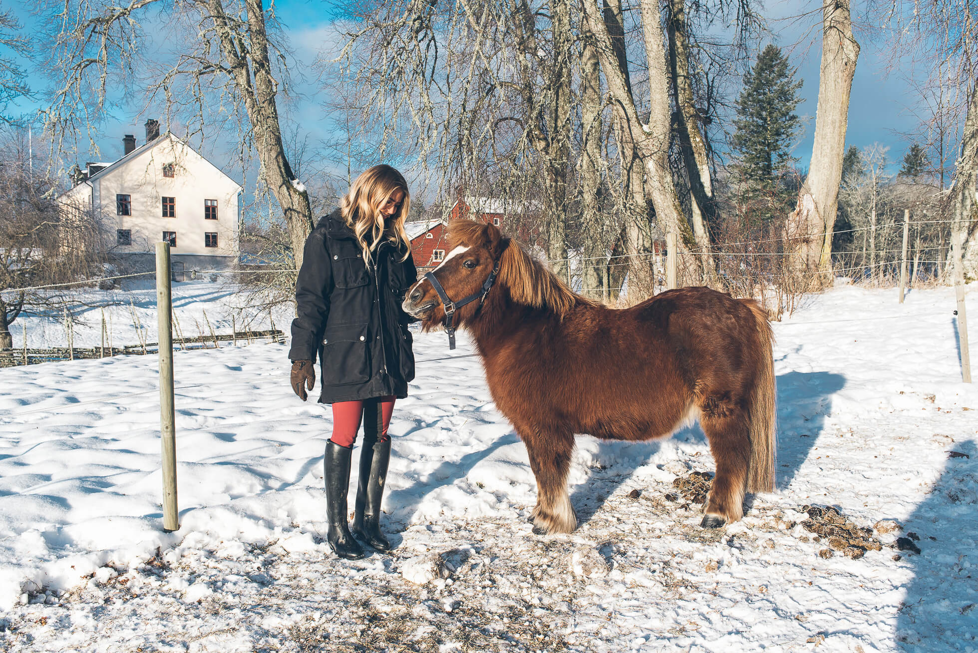 janni-deler-horses-snowDSC_6492