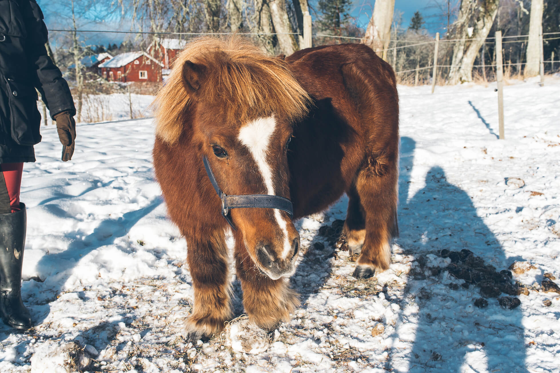 janni-deler-horses-snowDSC_6495