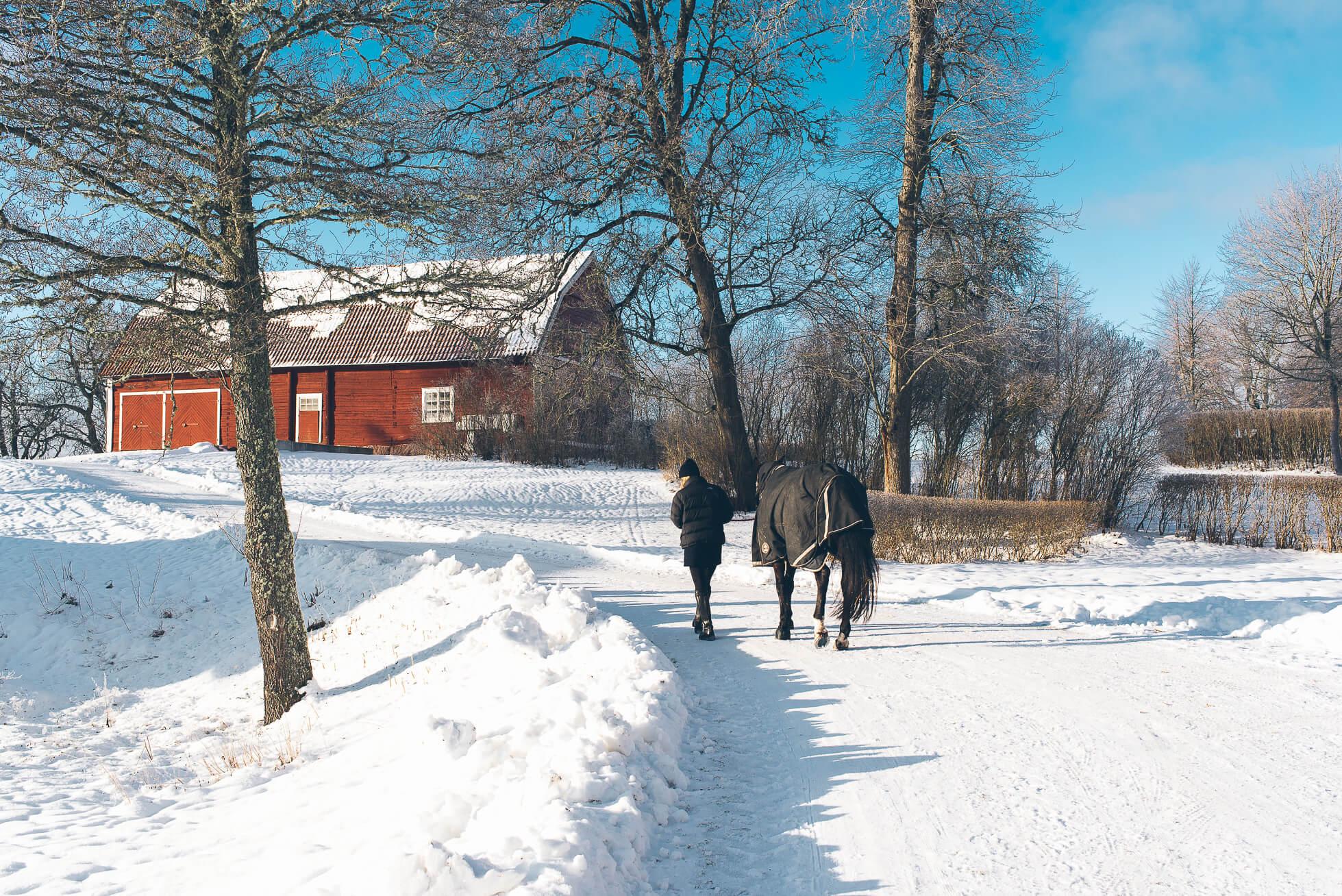 janni-deler-horses-snowDSC_6507