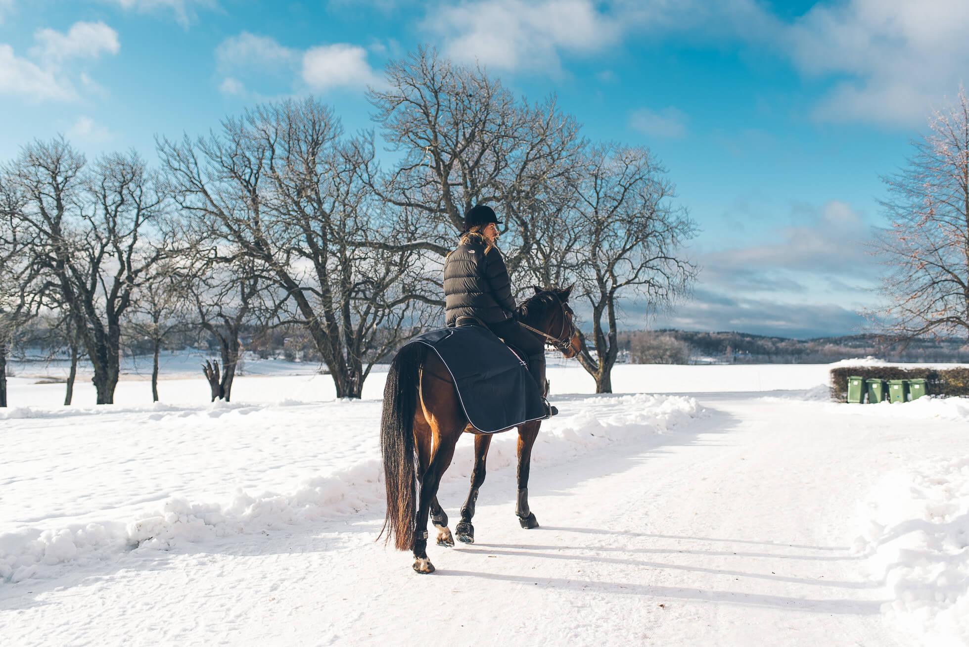 janni-deler-horses-snowDSC_6537