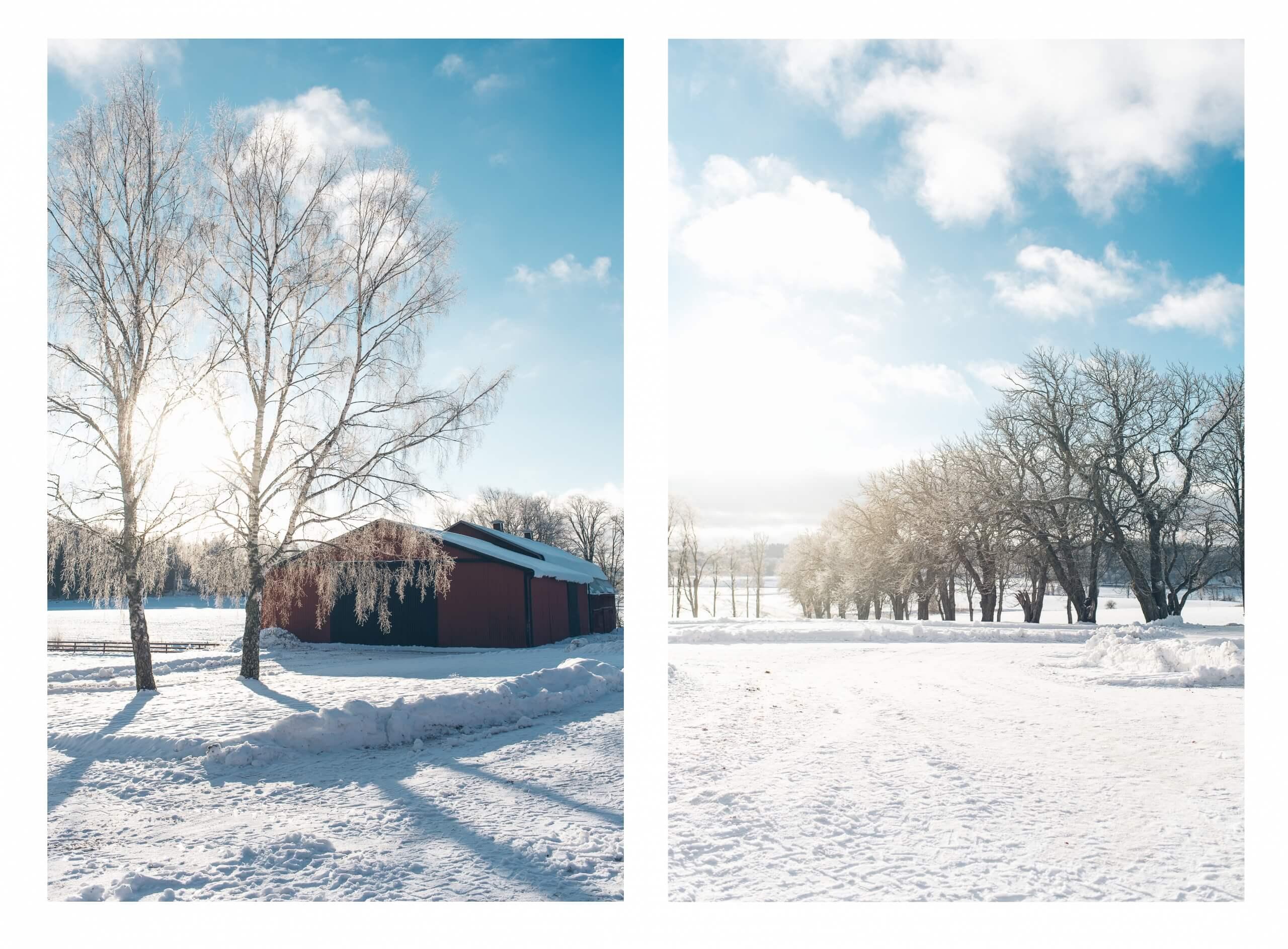 janni-deler-horses-snowDSC_6573 copy