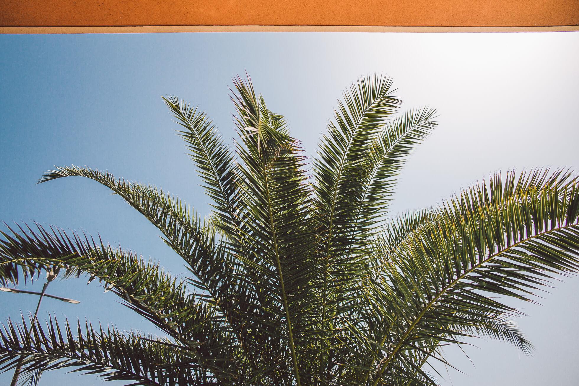 janni-deler-sunday-plansL1000935