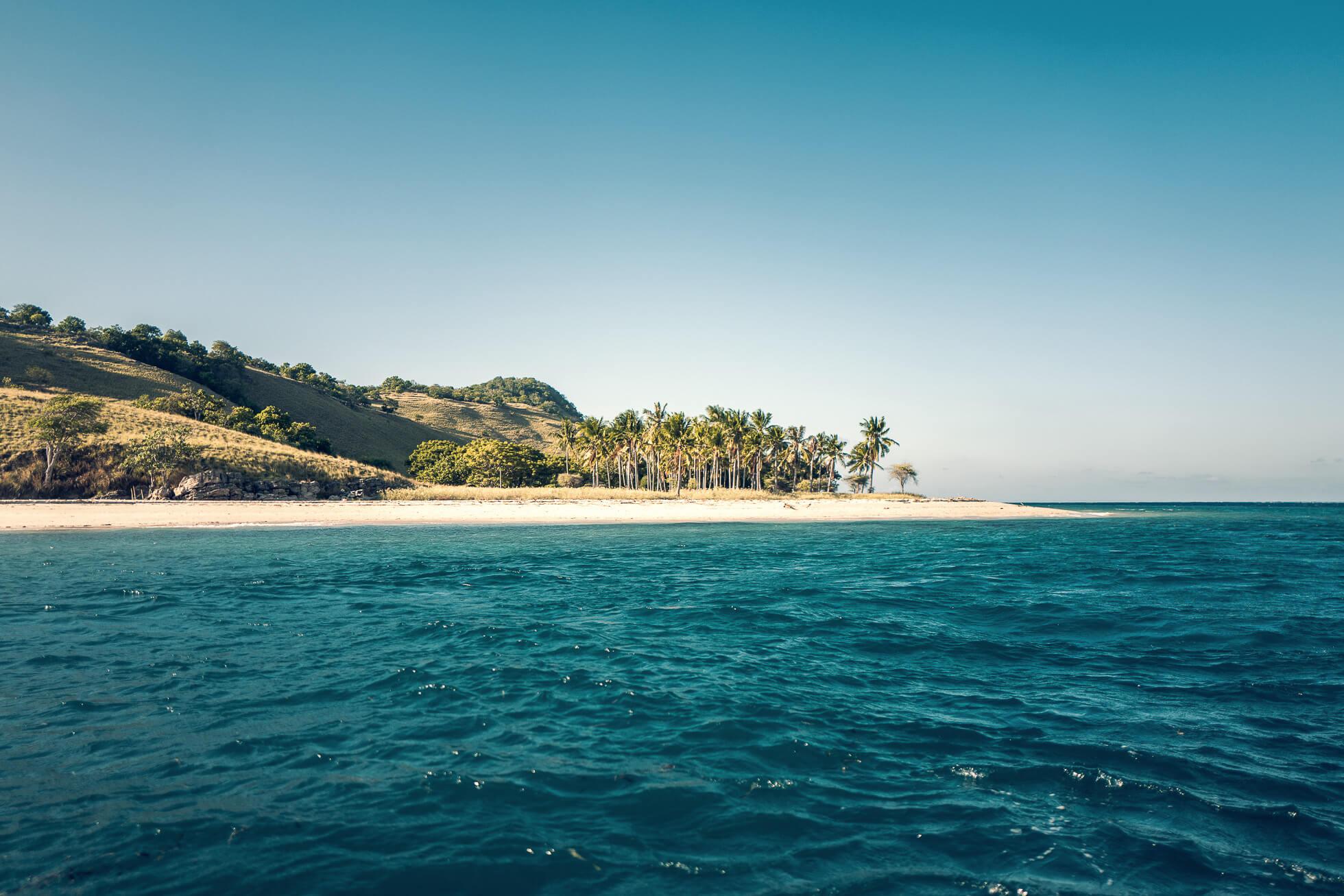 janni-deler-palm-tree-islandL1030354-Redigera