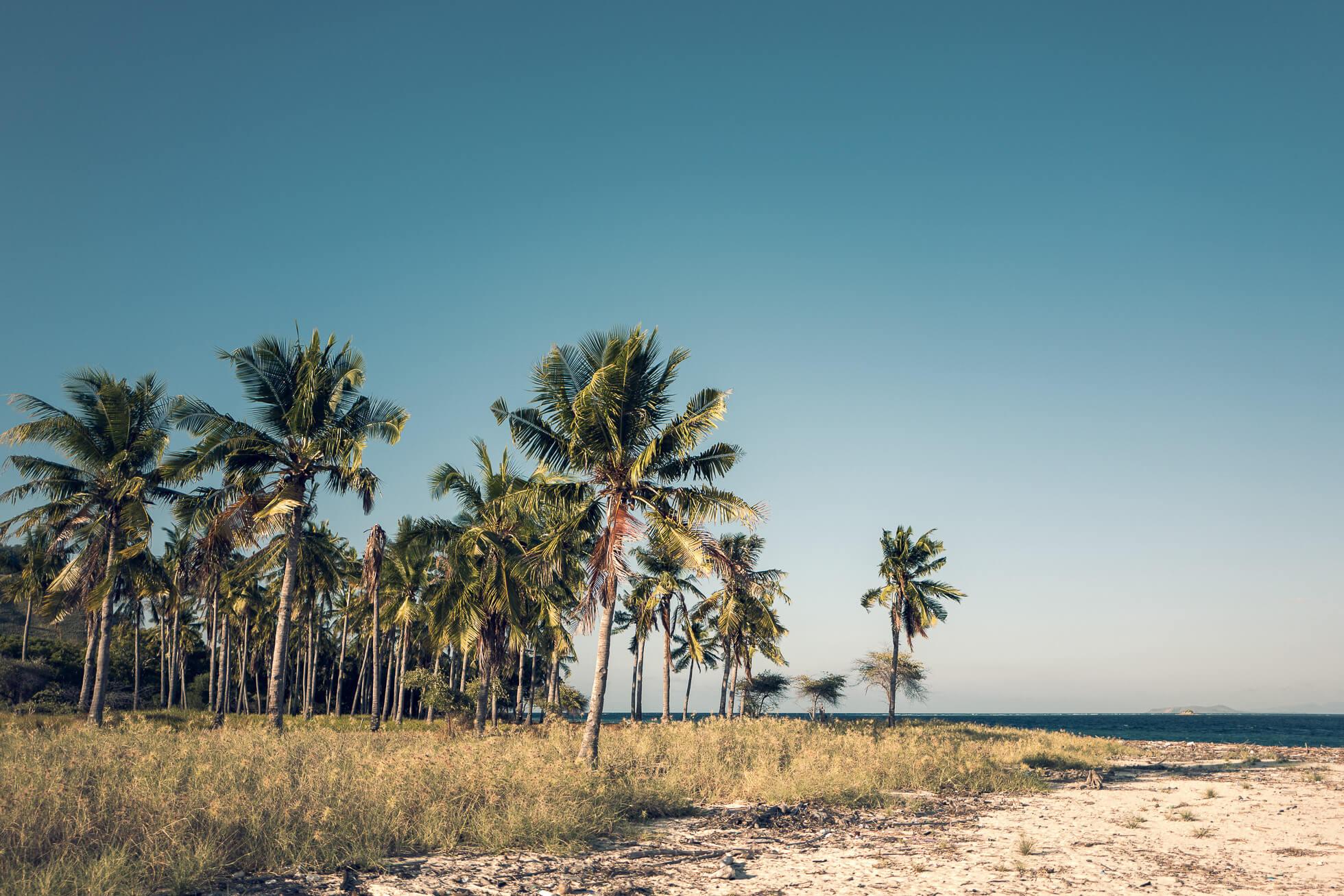 janni-deler-palm-tree-islandL1030363-Redigera