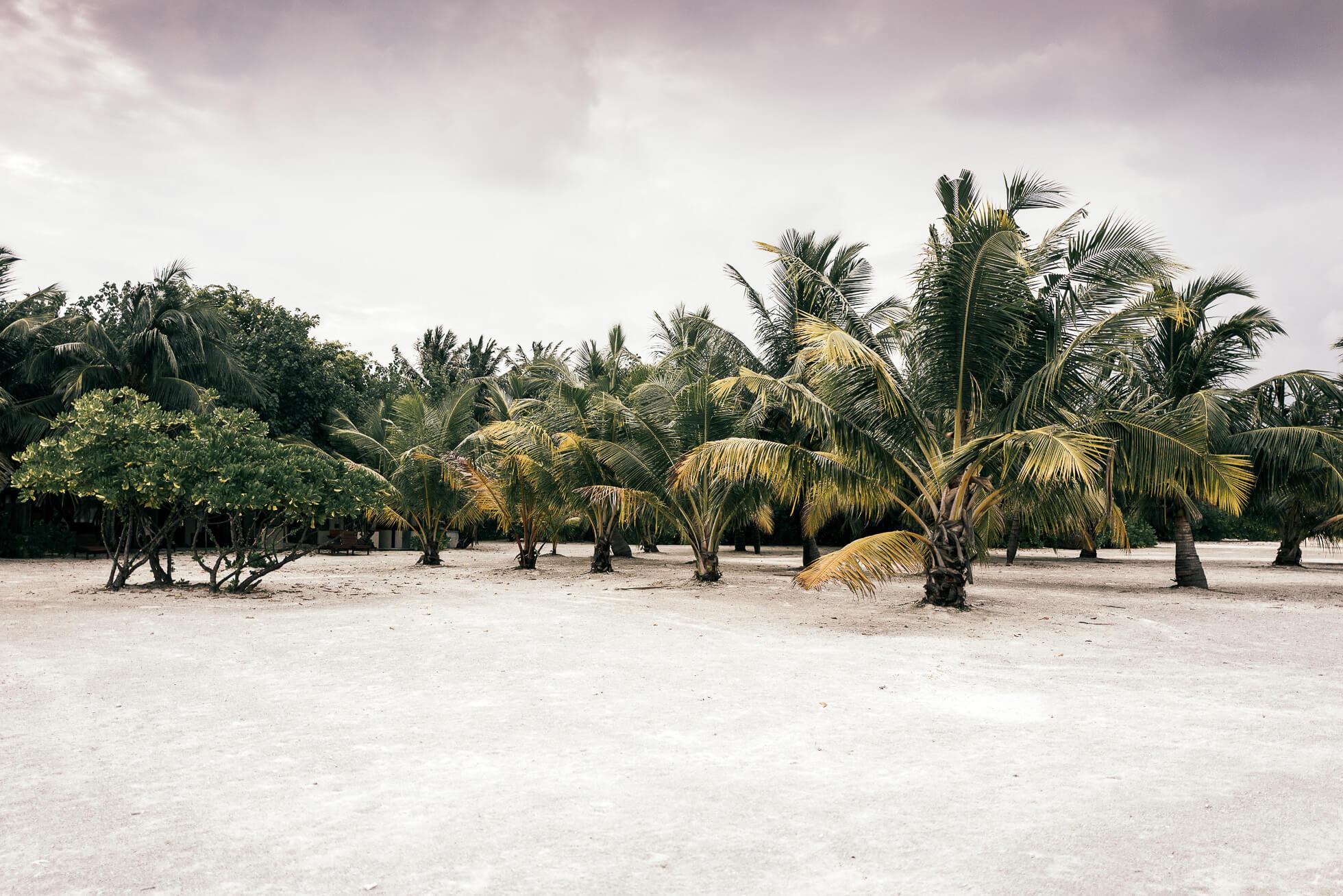 janni-deler-palm-tree-island-maldivesl1130133-redigera